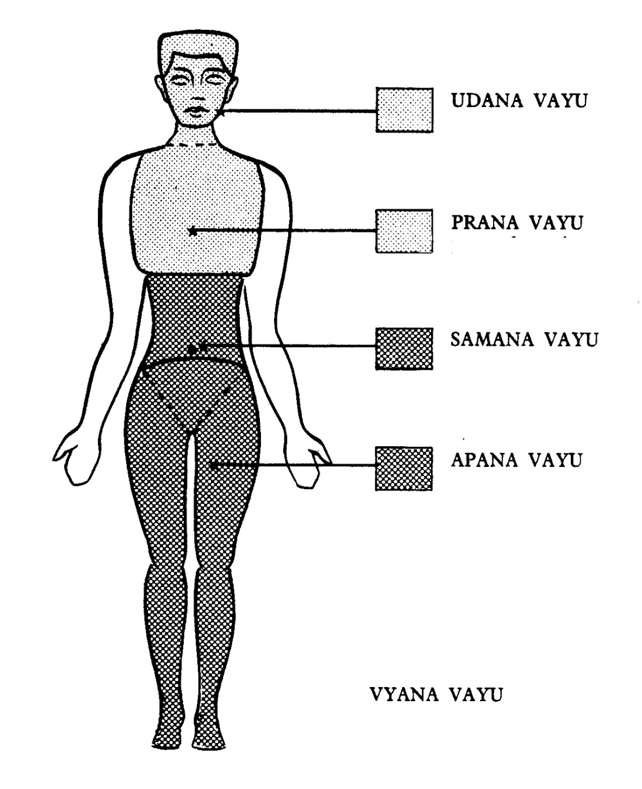 pranayama the five winds vayus